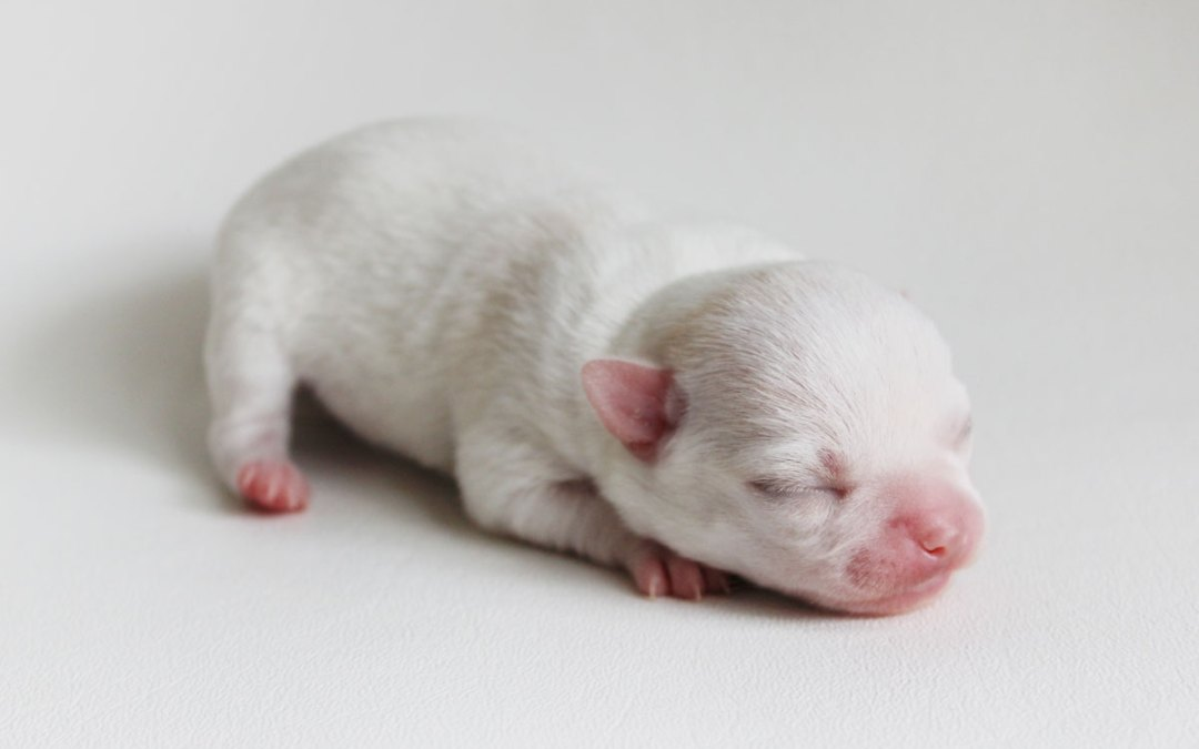 George - Born June 19 2015 - 5 ounces