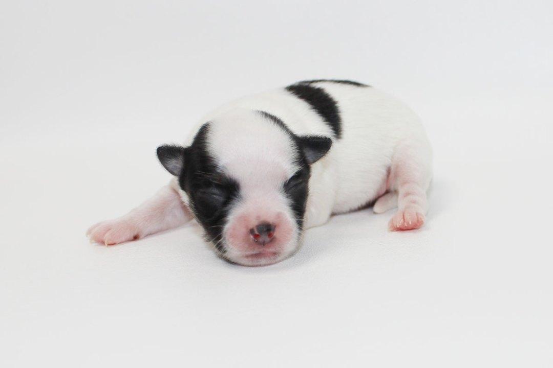 Harrison - 1 Week Old - 7.5 ounces