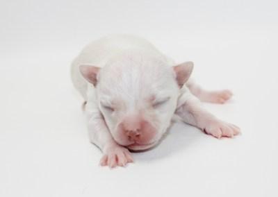 Sam - 1 Week Old - 6.2 ounces