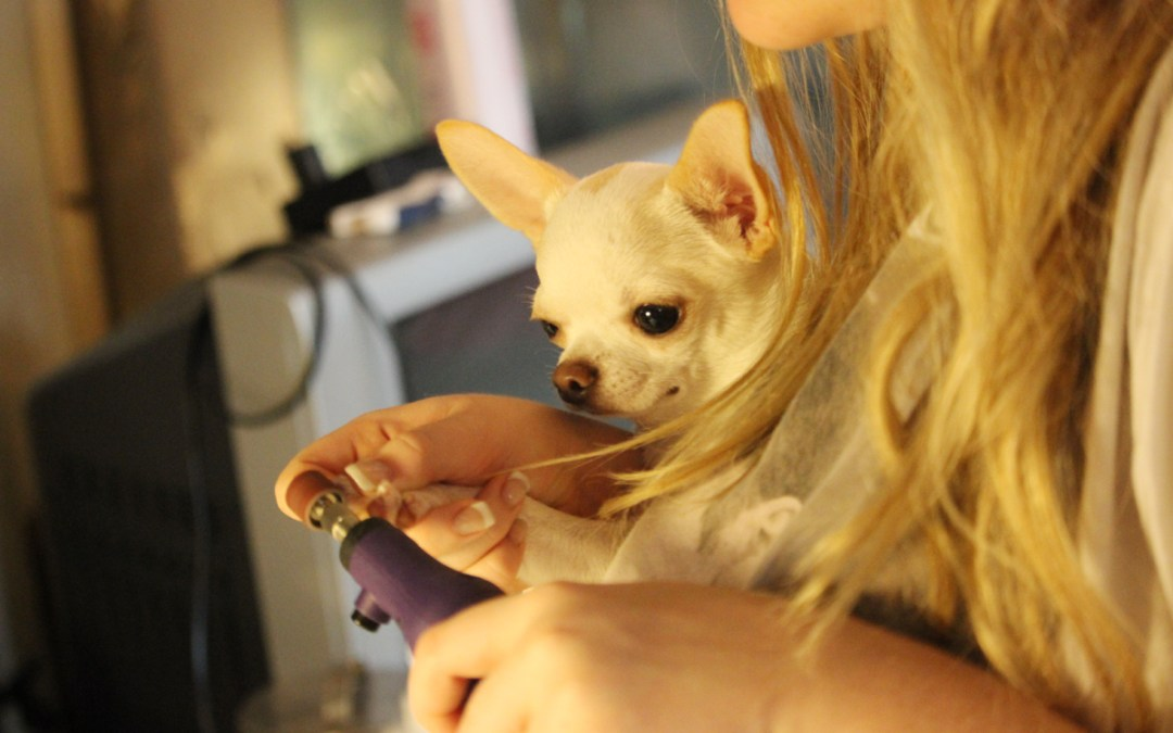 Dremel Time – Lessons in Dog Nails