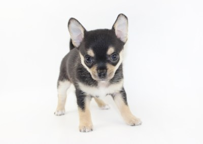 Bolt- 6 Weeks Old - Weight 1 lb 10 ozs