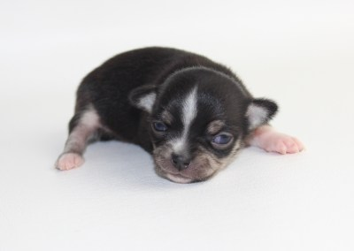 Simone - 2 Weeks Old - Weight 8.2 ozs
