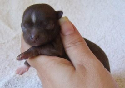 Kahlua - 1 Week Old - Weight 4 ozs