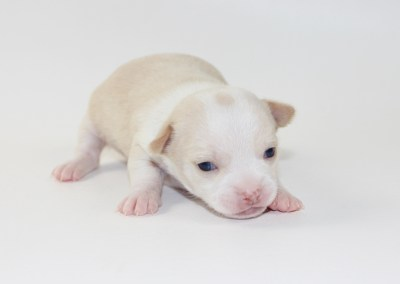Charlie - 2 Weeks Old - Weight 14.7 ozs