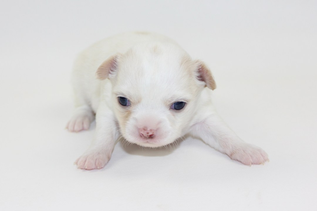 Thunder - 3 Weeks Old - Weight 1 lb 3.2 ozs