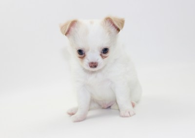 Thunder - 6 Weeks Old - Weight 1 lb 15.5 ozs