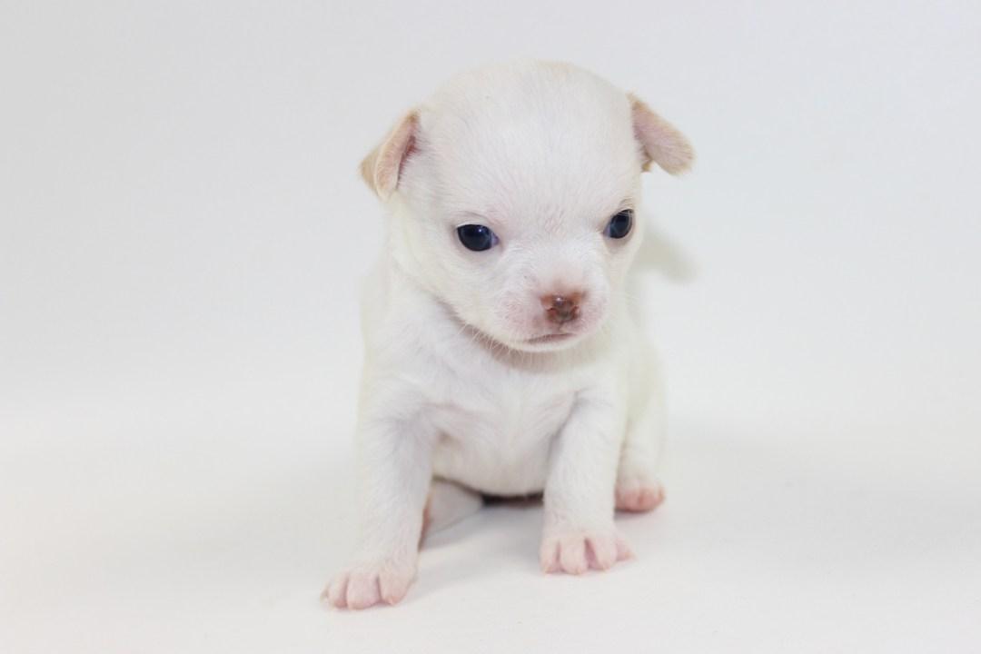 Teenie - 4 Weeks Old - Weight 1 lb 2.3 ozs