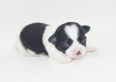 Him - 2 Weeks Old- Weight 14.8 ozs