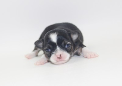 Tini - 2 Weeks Old- Weight 12.4 ozs