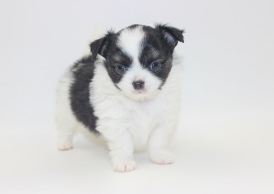 Him - 5 Weeks Old- Weight 1 lb 8 ozs