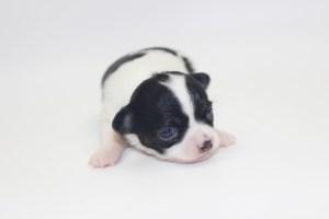 Bella - 2 Weeks - Weight 11 ozs
