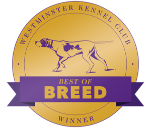 2020 Westminster Long Coat Chihuahua Best of Breed!