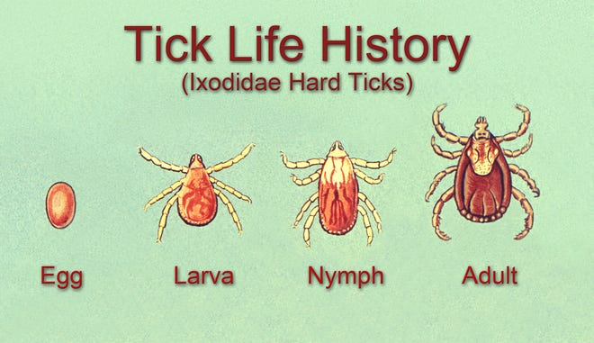 Graph depicting the life of a tick