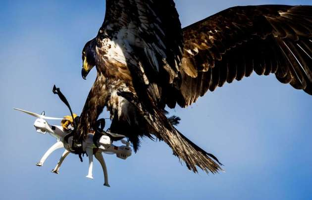 bird-attacking-drone-2