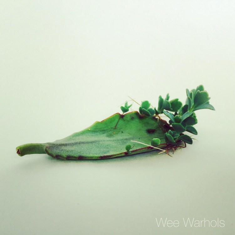 succulent, Wee Warhols, Austin, art class, STEM ,