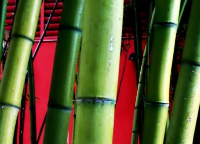 bamboo cane darwin Bell flickr.com/photos/darwinbell