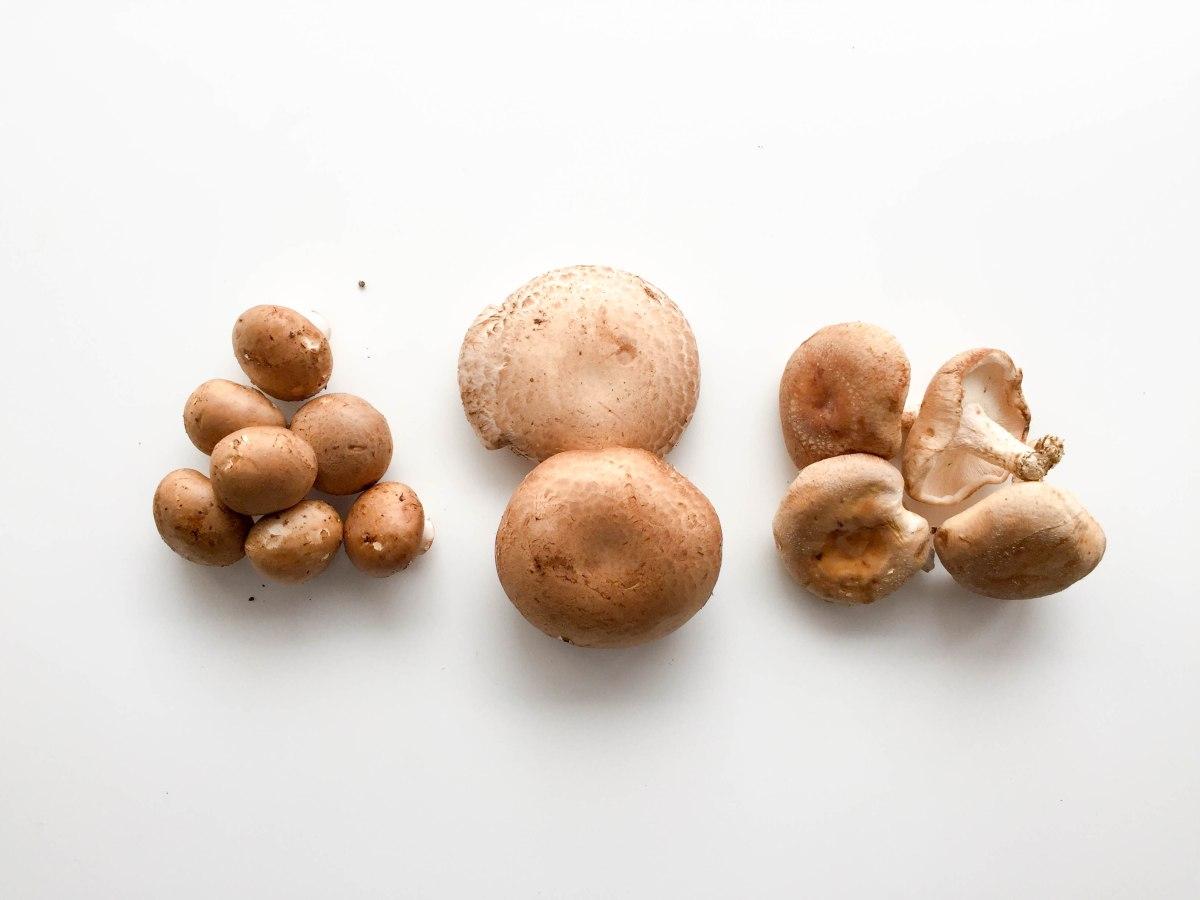mushrooms (1 of 1)-4