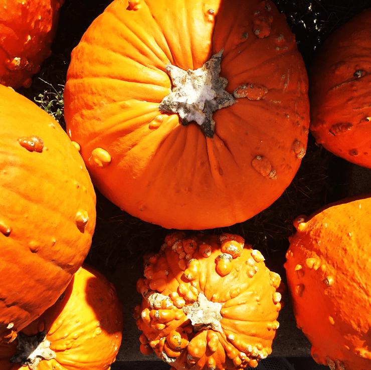 Featured Ingredient: Pumpkin