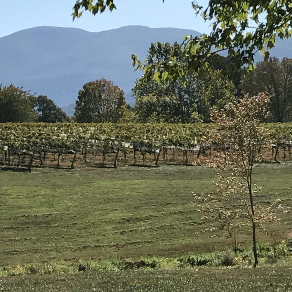 Veritas Vineyards, Charlottesville, VA