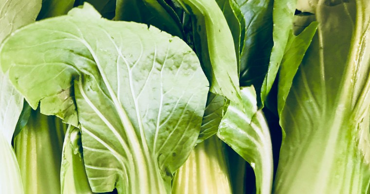 Featured Ingredient: Bok Choy