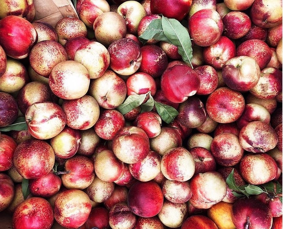 Featured Ingredients: Nectarines