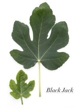 Black Jack 2.1