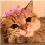 Gatos com Corações