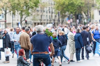 Rien à voir avec la manifestation, ce cycliste ne faisait semble-t-il que passer... avec un perroquet sur l'épaule.