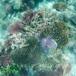 Pulau Mataking Syurga Hidupan Dasar Laut
