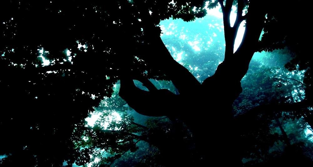 Rahsia Datuk dan Pokok Ara