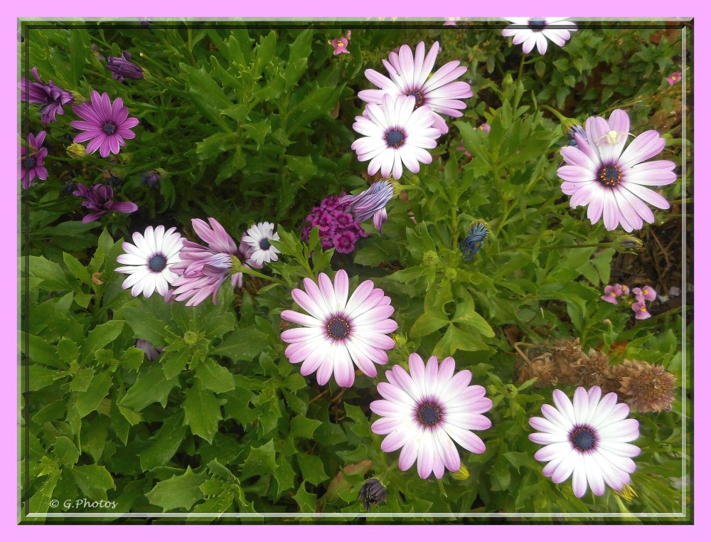 Photos - 11-09-2015 - Fleurs à l'arrêt du bus (1/5)