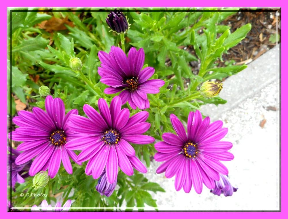 Photos - 11-09-2015 - Fleurs à l'arrêt du bus (5/5)