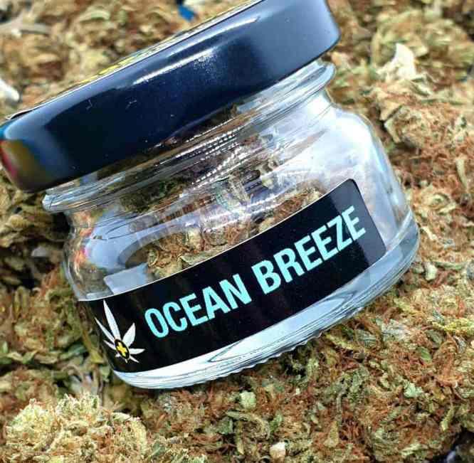 Susz CBD Konopny 5,28% Ocean Breeze