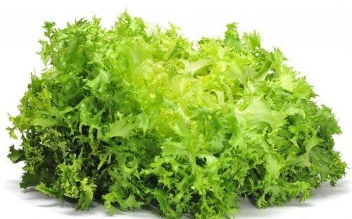 Risultati immagini per insalata ricciolina