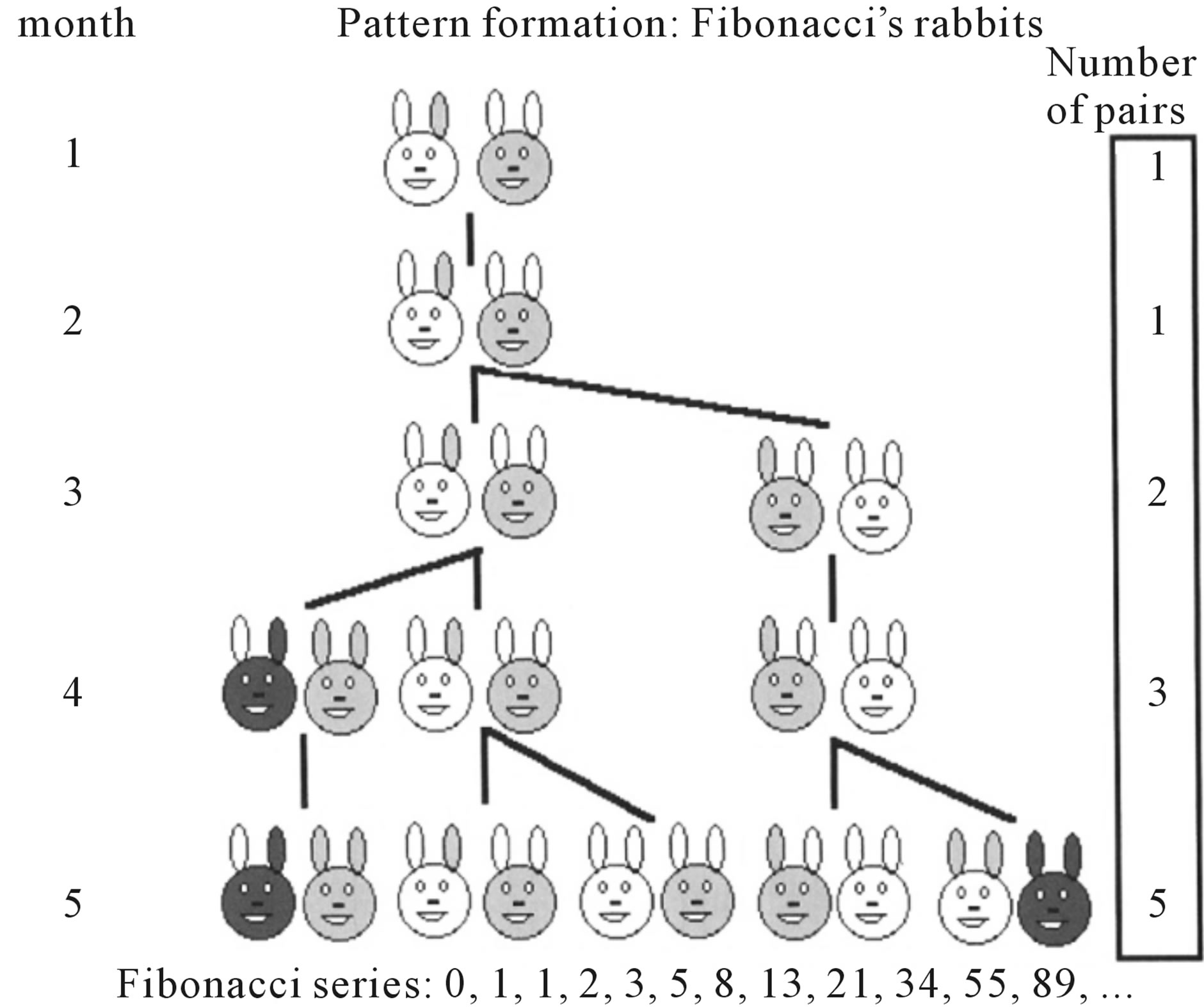 Occurrence Of Fibonacci Numbers In Development And
