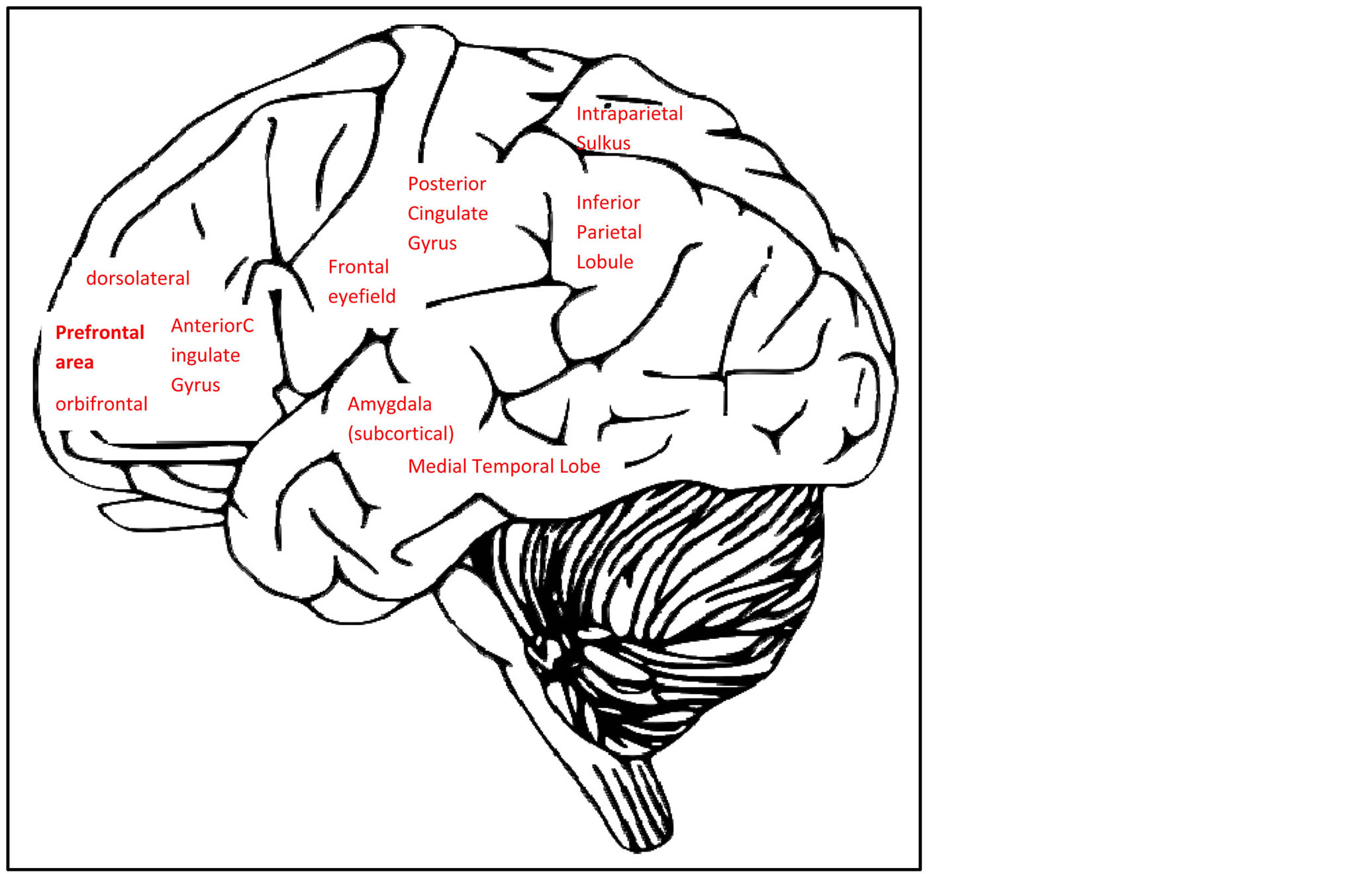Cognitive Effects Of Late Life Depression Review Of