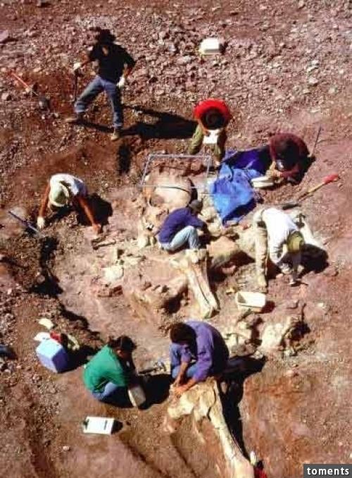 世界各地竟都陸續挖掘出了巨人骷髏!難道巨人是真正存在的嗎?讓人下巴都掉了!