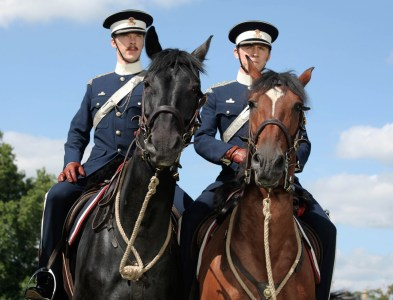 Cheval De Guerre, France 3 : Le Terrible Destin Des Chevaux De... - Télé  Star