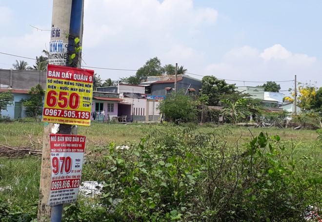 Mua đất như…mua rau tại điểm nóng 'sốt' đất quận 9 1
