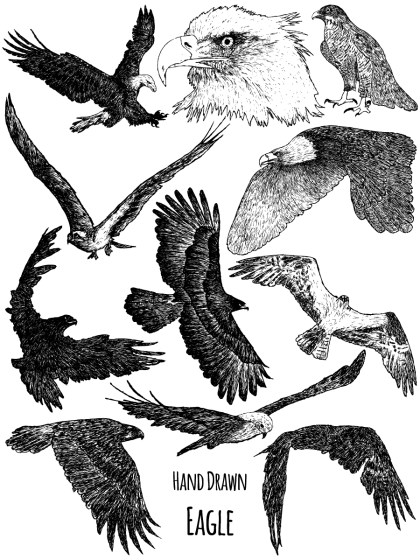Hand-Drawn Eagle Vector and Photoshop Brush Pack-01