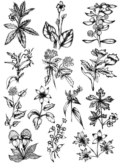 Sketchy Plants Vector and Photoshop Brush Pack-05