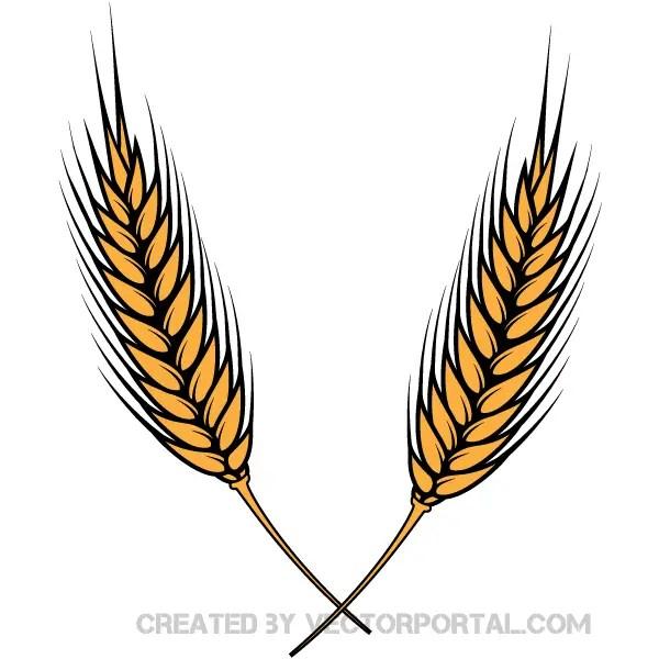 Wheat Vector Illustrator