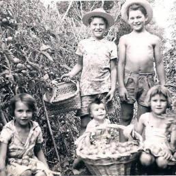 filhos-na-plantação-de-tomates