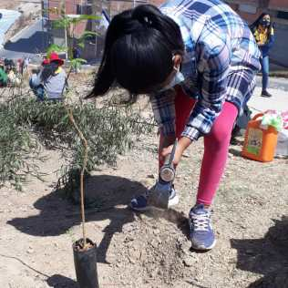 plantando2