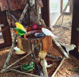 O estudo das aves faz parte do cotidiano dos alunos. Foto: IAPE