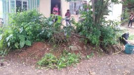 Vegetação cobria parte da fachada da casa