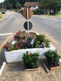Canteiro revitalizado na rodovia de acesso à Benedito Novo. [Foto: Juliana Krüger].