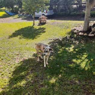 Abrigo em Chapecó cuida de cães e gatos abandonados. [Foto: Reprodução].