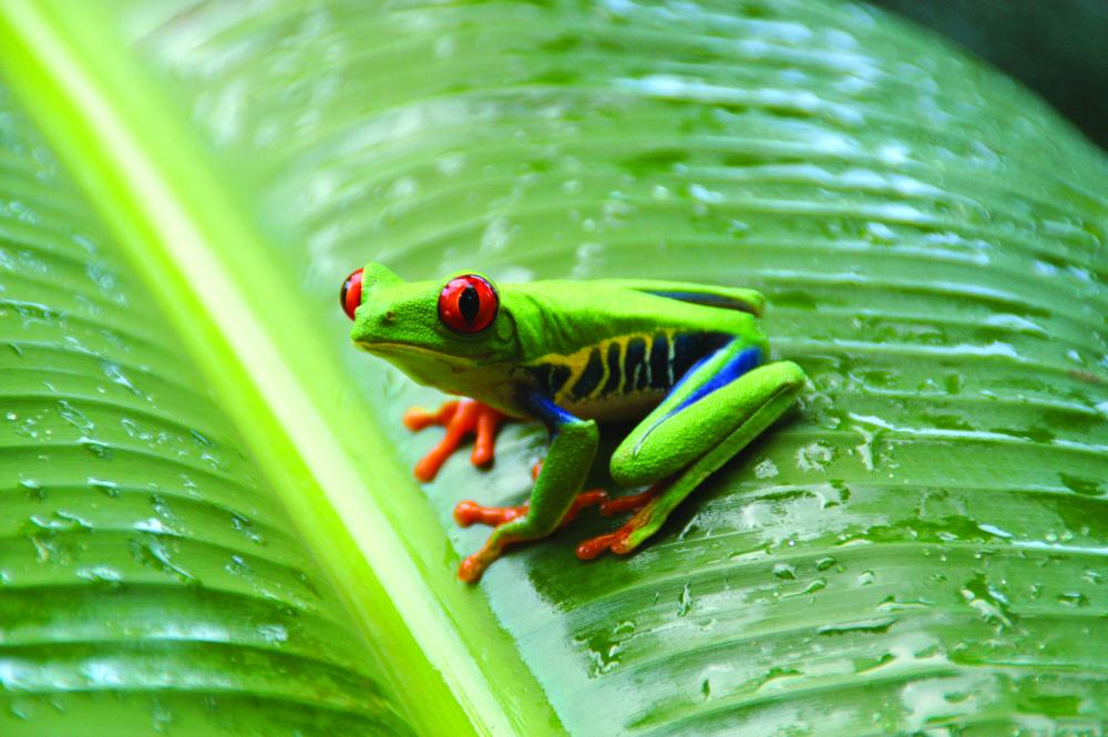 Animals of the Amazon Tropical Rainforest: a look at some of the most  unique animals on earth.