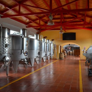 Enologia: produção de vinho tem espaço no mercado e atrai universitários